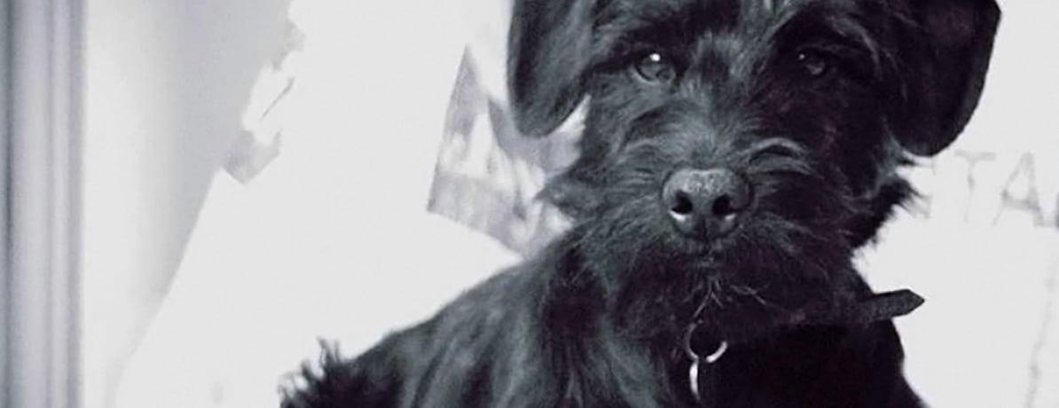 studio mascot - Monty the dog